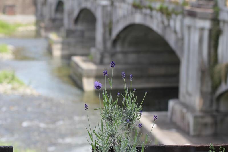 窓辺の花と鴨川