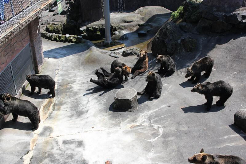 たくさんの熊