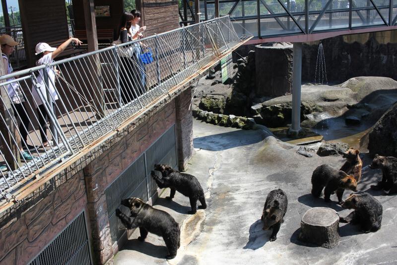 熊の餌やりの様子