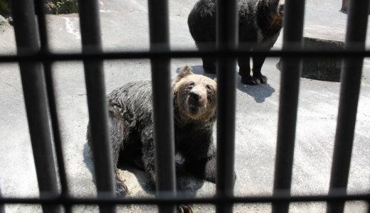 熊本阿蘇カドリー・ドミニオンは子連れで楽しめるエンタメ動物園だった!