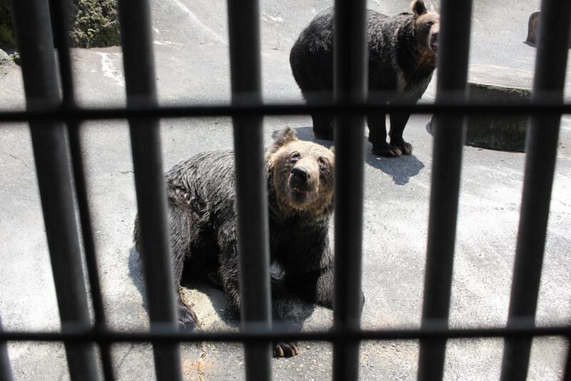 熊との距離が近い